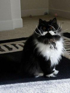 13 Cats Born With Perfect Mustaches more here http://artonsun.blogspot.com/2015/04/13-cats-born-with-perfect-mustaches.html