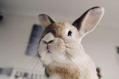 Animal Collective, Cute Bunny, Rabbits, Buns, Mom, Hair, Animals, Bunnies, Cute Pets