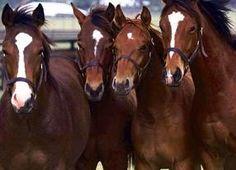 Fotos de caballos. Imágenes de caballos