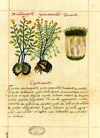 Badianus manuscript online dating