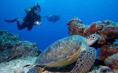 3 Reasons to Consider Maldives Diving Holidays - #maldives #diving #scuba #holiday