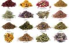 15 plantas medicinales que arruinarían las farmacéuticas.