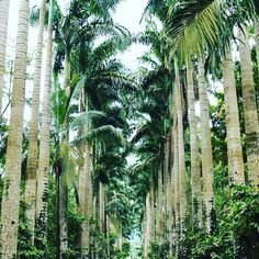 #malabo #equatorialguinea #cocoaplantation