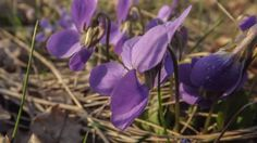 Photograph Violets by Lilian Putina on 500px