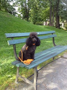 Douglas enjoys people watching from a park bench.