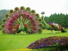 Compartimos unas esculturas realizada con plantas.  Este extraordinario arte se llama poda ornamental o Topiaria