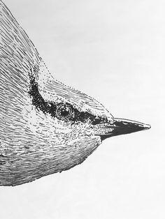 Detail Boomklever 2017 Whale, Fine Art, Detail, Illustration, Animals, Whales, Animaux, Illustrations, Animal