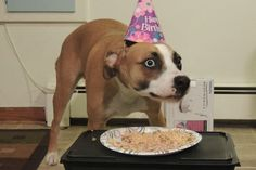 "And finally, this dog who is somehow mortified by some pasta and a birthday celebration. | 31 Animal Pictures That Will Make You Say ""WTF"""