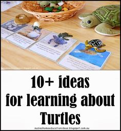 10  ideas for learning about Turtles PLUS printable Venn diagram and Types of Turtles printable cards