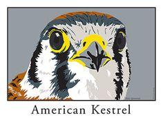 American Kestrel, Bird Prints, Owl, Animals, Kestrel, Animales, Animaux, Owls, Animal Memes