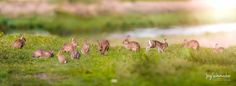 Kaninchen / Rabbit –  » #Kaninchen  #Tierfotografie #Fotografie #einfachMedien #Bildbearbeiter #JoergSchumacher #myfavpicoftheday #myfavpicoftheweek #Rabbit #Animalphotography #Photography