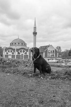 'Labrador vor Moschee' von toeffelshop bei artflakes.com als Poster oder Kunstdruck $17.33