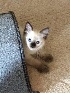 Floppycatscom Floppycats Su Pinterest