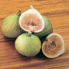 Italian Honey Fig Tree, two crops per year, Park Seed