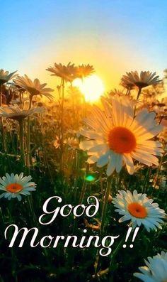 Good Morning Picture, Morning Pictures, Good Morning Images, Good Morning Beautiful People, Good Morning Flowers, Good Morning Greetings, Good Morning Wishes, Flower Wallpaper, Wallpaper Backgrounds