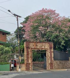 Samu-u de Asunción-Paraguay