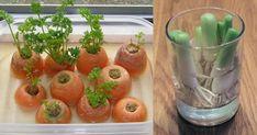 Λαχανικά στο σπίτι: 8 εύκολες επιλογές - Πως θα τα καλλιεργήσετε - Enimerotiko.gr Stuffed Peppers, Vegetables, Food, Stuffed Pepper, Essen, Vegetable Recipes, Meals, Yemek, Stuffed Sweet Peppers