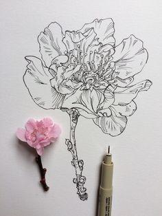 art by noel badges pugh Botanical Line Drawing, Floral Drawing, Botanical Drawings, Botanical Art, Botanical Illustration, Illustration Art, Flower Sketches, Art Sketches, Pencil Drawings