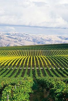 Salinas Valley vineyards contribute to the growing recognition of Monterey County as a top wine destination. Photo: David Gubernick, MCCVBC