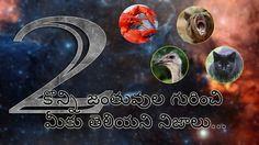 Animal facts in telugu part-1 | telugufactstrendy