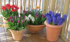Four Easy Bulb Planters to Make Now