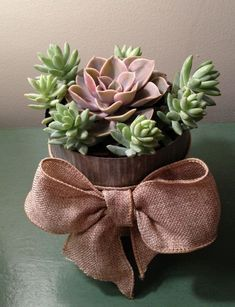 55 creative DIY succulents ideas for you - Page 52 of 55 - SooPush Succulents, plants, DIY, potted plants, succulents idea. Types Of Succulents, Succulents In Containers, Cacti And Succulents, Planting Succulents, Planting Flowers, Potted Plants, Succulent Gardening, Succulent Care, Succulent Pots