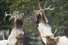 10 Best Reasons to Take Kids to Rocky Mountain National Park -YMCA of the Rockies, Estes Park