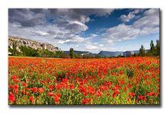 40622057 / Cuadro Campo de Amapolas en primavera