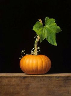 Little pumpkin still life.