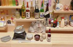 Irrésistibles photos de hamsters barmen, commerçants, avec un smartphone...