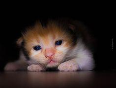 https://flic.kr/p/qZitHP | Baby kitty