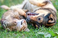 Help your pet enjoy better oral health with these tips from Zymox.
