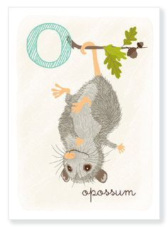 O is for Opossum  alphabet print by SeaUrchinStudio on Etsy, $10.00