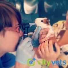 #veterinary