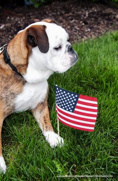 27May13 Fenway - Bulldogs - Memorial Day