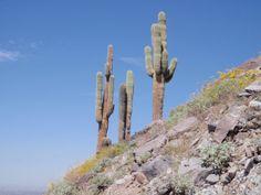 Cross Country Road Trip 2010, through the western USA. Scottsdale, Arizona