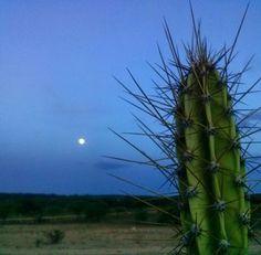 Prévia da #lua cheia de amanhã, a aguardada #superlua de 2016. Hoje já está redondinha e brilhante no céu do #sertão  #moon  #luna #meusertão #naestrada