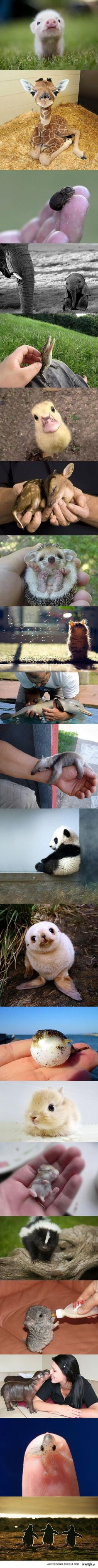 Awwww!!!! OMG SO CUTE!! Baby animals yay!! Ya!