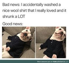 Hilarious Memes That Are Way Too Funny To Handle - 10 Funny Dog Memes, Funny Animal Memes, Cute Funny Animals, Funny Cute, Funny Dogs, Cartoon Memes, Super Funny, Bts Memes, I Love Dogs