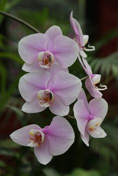 Orchids, Kandy Botanical Gardens, Sri Lanka To book go to…