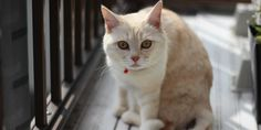 You'd Be Surprised To Learn What Your Cat Thinks About You - we are big, friendly kittens