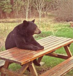 Booboo, isn't anyone going to bring me a Pic-a-nic Basket?  The Ranger must be telling them NOT to feed the Bears!!