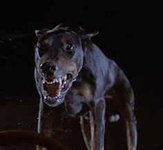 the five amazing dobermanns films - Yahoo Image Search results