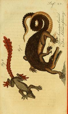 1 - Herrn de la Cepede's Naturgeschichte der Amphibien, oder der enerlegenden vierfussigen Thiere und der Schlangen : - Biodiversity Heritage Library