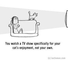 20 Signs That You're A Crazy Cat Parent