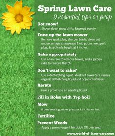 how to take care your grass