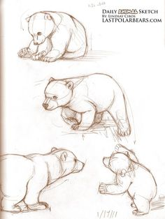 croquis animal - dessin ours - animal sketch – bear drawing croquis animal – dessin ours Baby Animal Drawings, Animal Sketches, Drawing Sketches, Art Drawings, Sketching, Polar Bear Drawing, Baby Polar Bears, Grizzly Bears, Bear Cubs