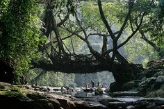 Shillong Living Bridge