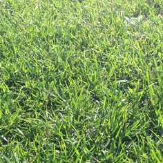 Groen is gras Groen is gras  Onder mijne voeten
