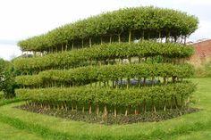 10 Hedge, Charles Poulsen